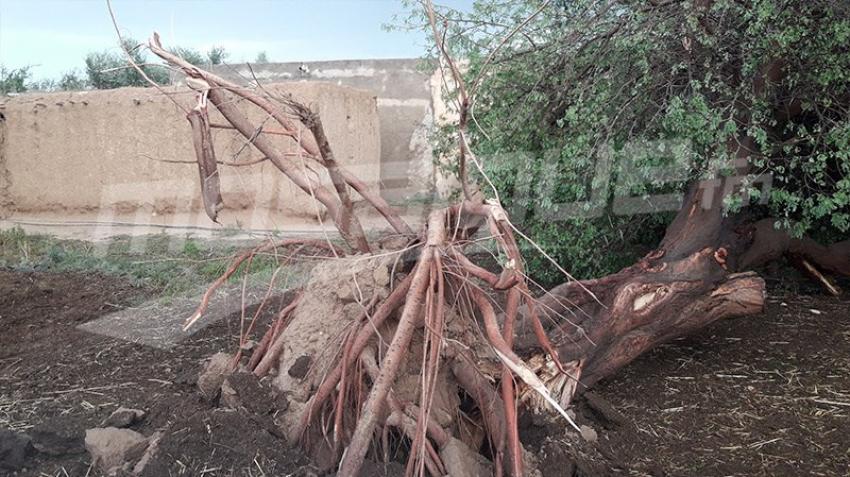 القيروان: عاصفة تتسبب في أضرار فلاحية جسيمة