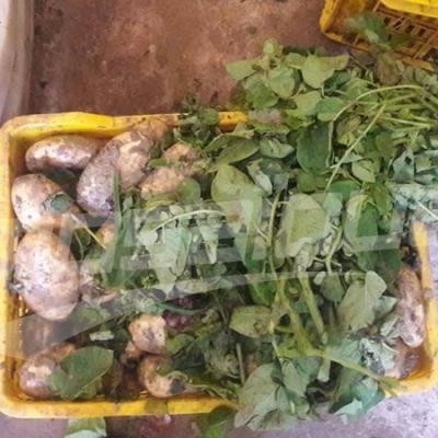 المنيهلة: الكشف عن مستودع عشوائي لتخزين الخضر