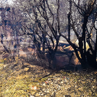 اندلاع حريق بوادي مصوج المحاذي لمدينة سليانة