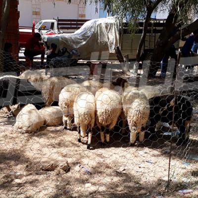 Tataouine: 15 mille moutons de sacrifice disponibles et absence des moutons de contrebande