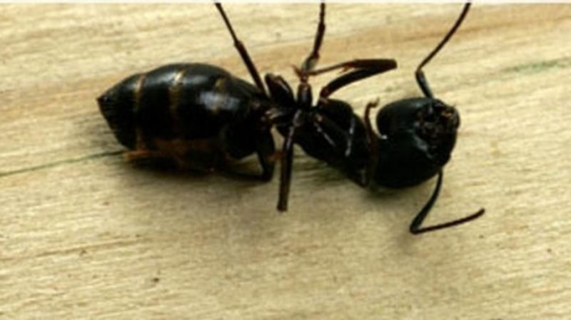سبيبة: وفاة طفلة بعد تناولها مبيدا للنمل