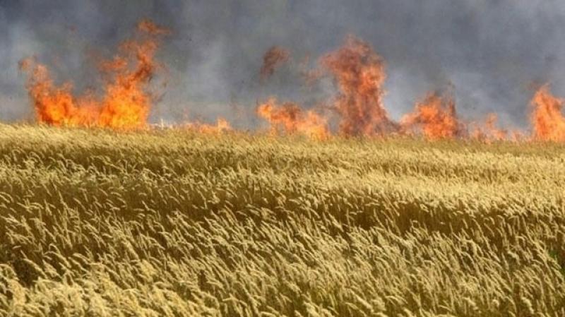 بنزرت: حريق يأتي على 7 هكتارات من صابة الحبوب