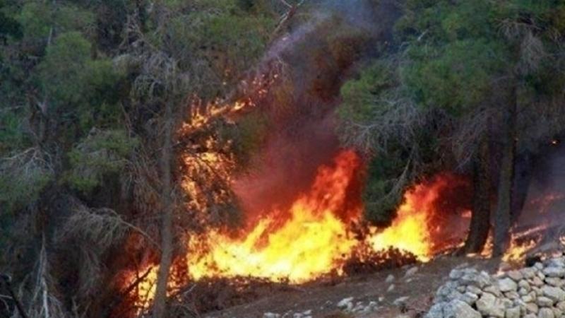 حريق بغابة