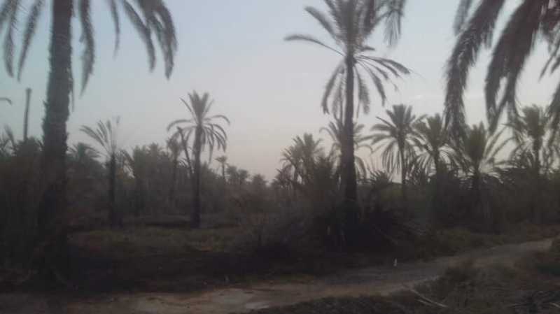 الحامة: حريق يتسبب في اتلاف أعداد من أشجار النخيل والرمان