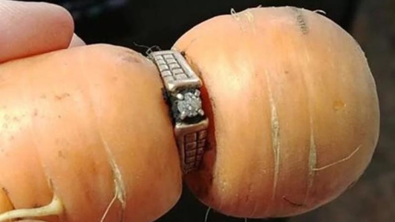 بعد عقد من الزمن تعثر على خاتم زواجها في جزرة !
