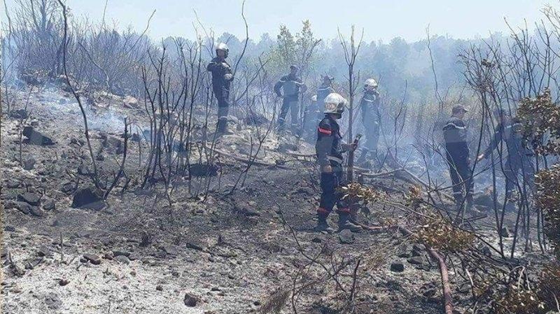 بطاقة ايواء في حق طفلين تورطا في اضرام النار بغابات جندوبة