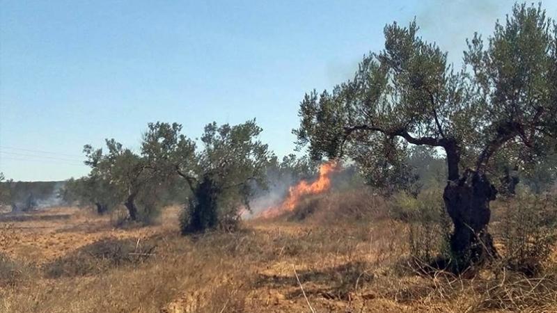 منزل بورقيبة: حريق يأتي على 3 هكتارات من الزياتين