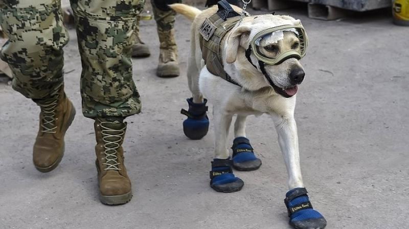 الكلبة فريدا