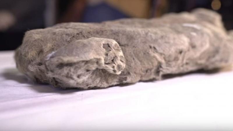 العثور على جثة أسد الكهف تعود لـ50 ألف سنة