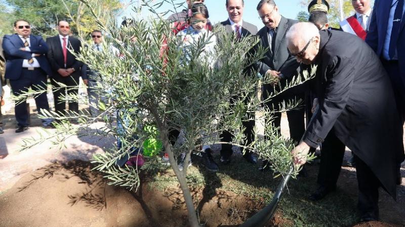 في عيد الشجرة: السبسي يعلن انطلاق حملة وطنية خارقة للعادة للتشجير