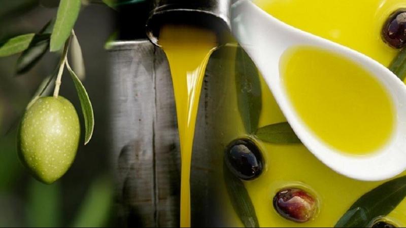 تطوّر صادرات زيت الزيتون البيولوجي