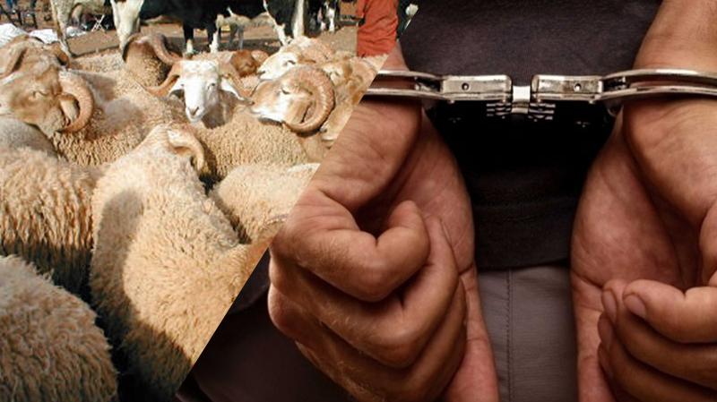 10 سنوات سجنا لمن يسرق مواشي أو محاصيل أو آلات فلاحية