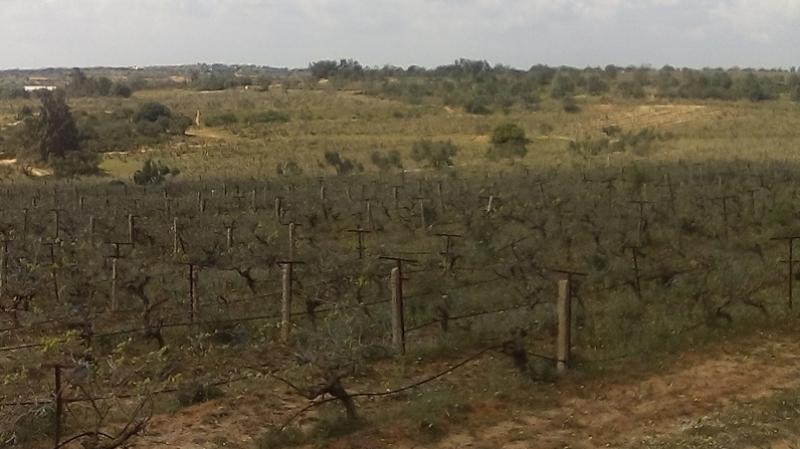 سليانة : استرجاع 100 هكتار من الأراضي الدولية