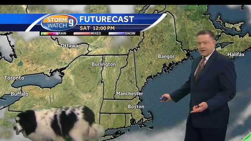 كلب يقاطع مذيعا خلال تقديمه النشرة الجوية!