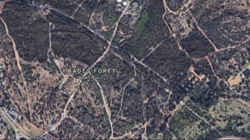 جمعيات بيئية تعارض مد طريق بغابة رادس