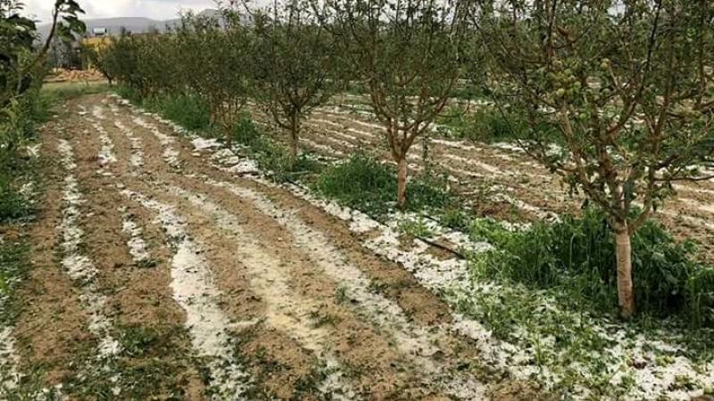 سليانة : تساقط البرد يلحق أضرارا جسيمة بحقول الغلال