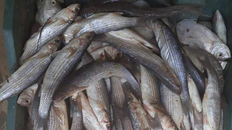 صفاقس: حجز وإتلاف كمية من الأسماك بسوق باب الجبلي