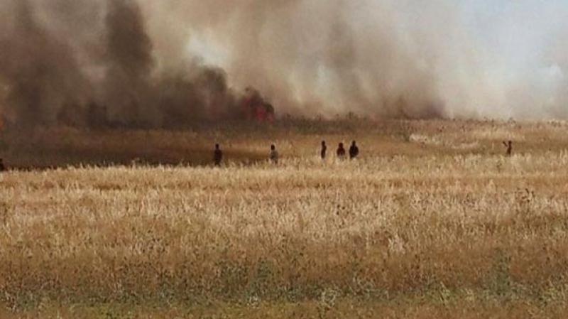 الكريب: حريق يأتي على حوالي 50 هكتارا من القمح