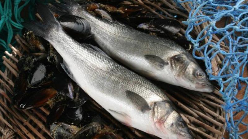 الميزان التجاري لمنتجات الصيد البحري يسجل تطورا إيجابيا بنسبة 67%