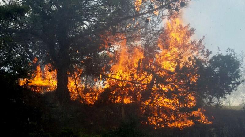 رواد: حريق يأتي على 8 هكتارات من أشجار الصنوبر