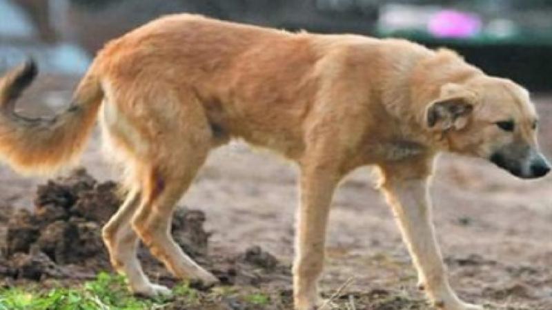 كلب ضال ينقذ حياة درّاج