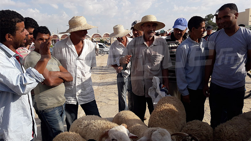 سيديبوزيد: توفّرت الأضاحي.. وغاب الحرفاء