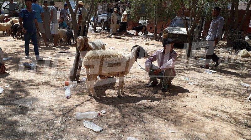 تطاوين: توفّر 15 ألف خروف للأضاحي وغياب الخرفان المهرّبة