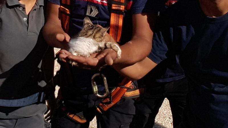 القيروان: انقاذ قطةمن داخل بئر عمقها 30 مترا