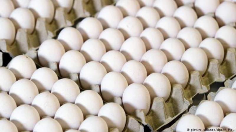 بن عروس: حجز 9000 بيضة و150 لترا من الزيت المدعّم