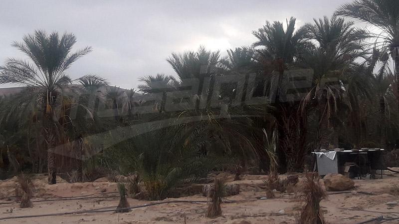 تمغزة: تضرر حوالي 80% من صابة التّمور بسبب الأمطار