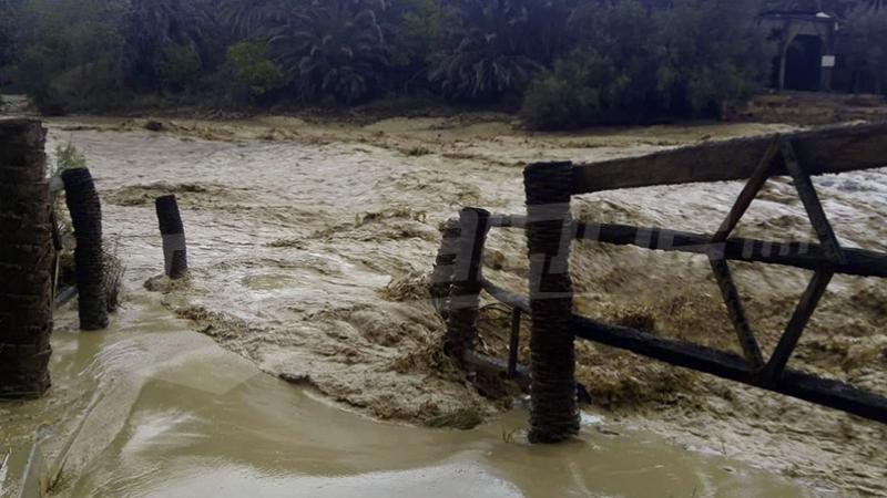 توزر: زيارات ميدانية لمعاينة الأضرار الفلاحية إثر الأمطار