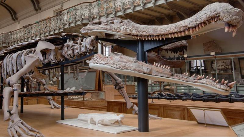 إكتشاف 12 صفيحة عظمية لظهر تمساح ''الساركوسوكس'' بتطاوين