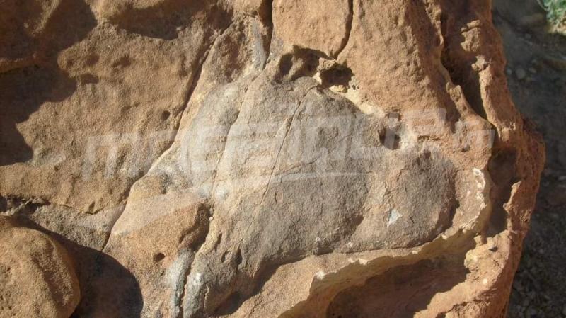 تطاوين: العثور على  قالب داخلي لرأس ديناصور وبيوض تماسيح