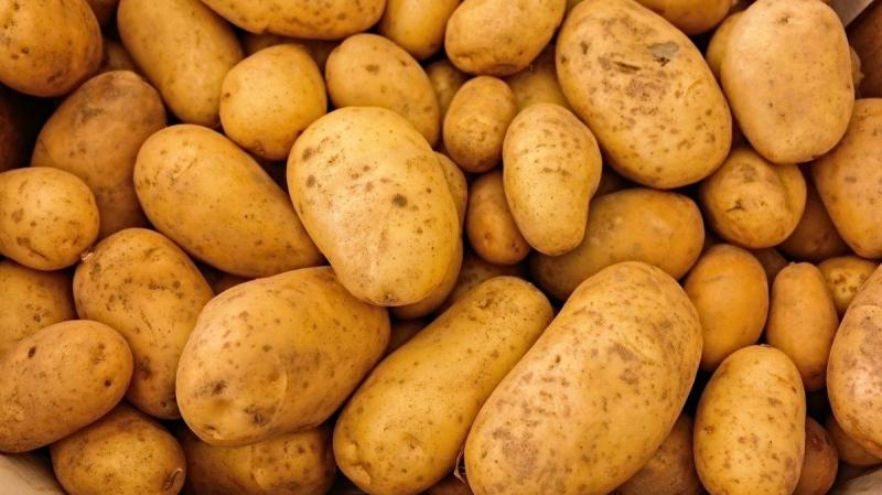 الإكتئاب يصيب البشر.. والبطاطا أيضا
