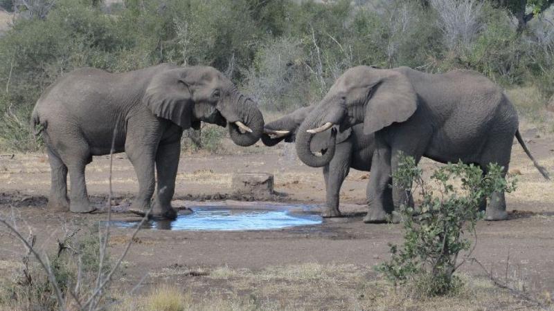 علماء يكتشفون سبب عدم إصابة الفيلة بالسرطان
