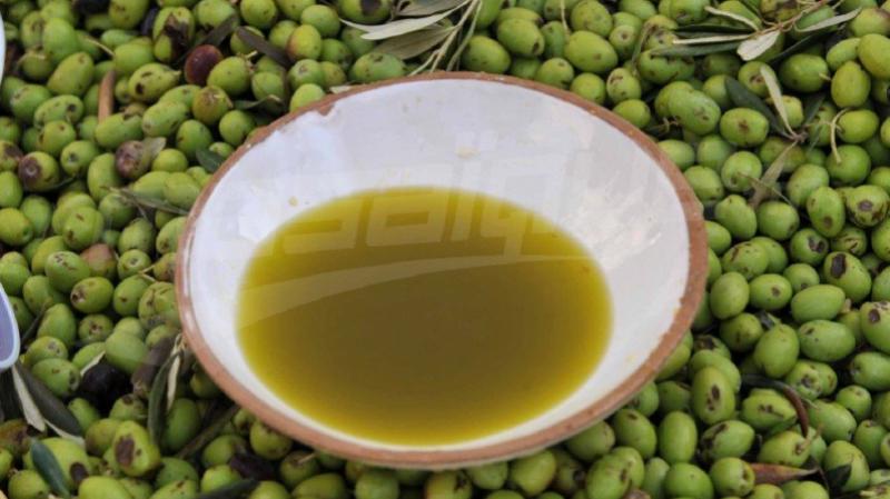 ديوان الزيت يواصل عرض زيتون الزيتون بـ 7800 مليما