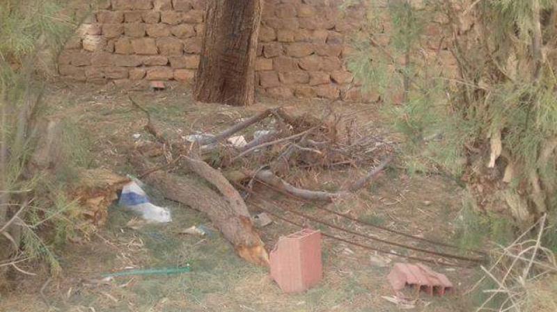 رمادة: الرياح القوية تقتلع الأشجار