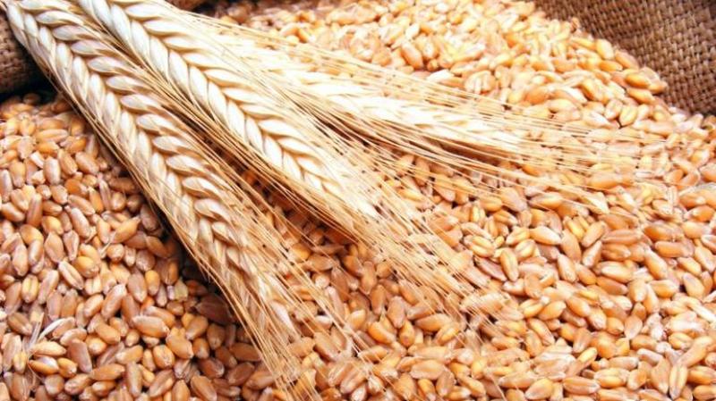 الشاهد يعلن الترفيع في تسعيرة الحبوب عند الإنتاج
