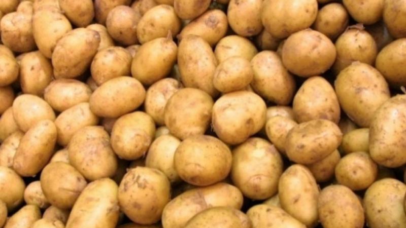 نقابة الفلاحين تستنكر توريد 3 آلاف طن من البطاطا من مصر