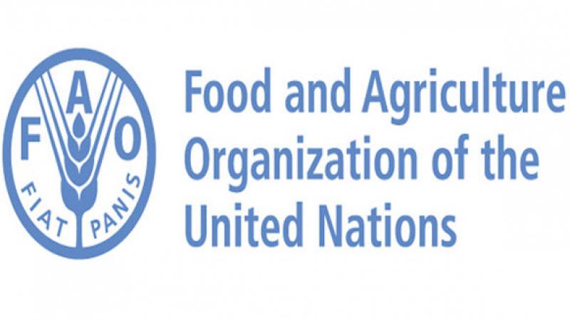 فاو: أسعار الغذاء العالمية ترتفع في ماي