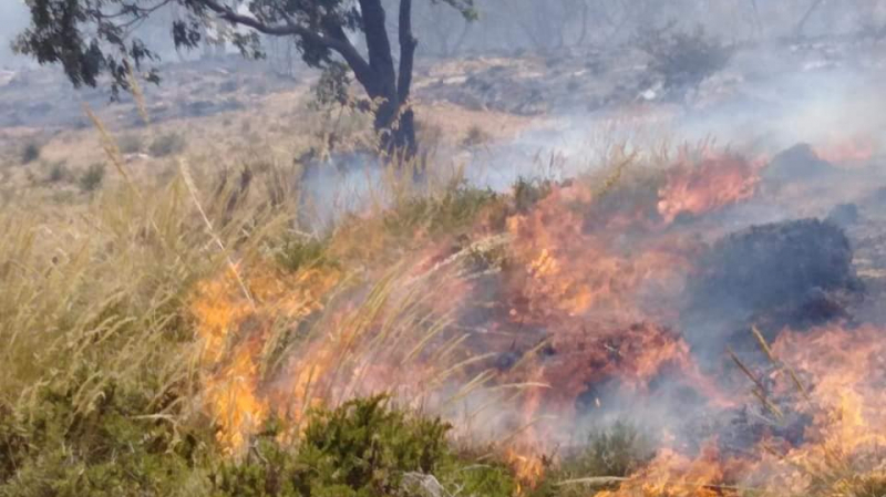 حريق غابة سيدي عمر: رئيس بلدية رواد يتهم ''لوبيات البناءات الفوضوية''