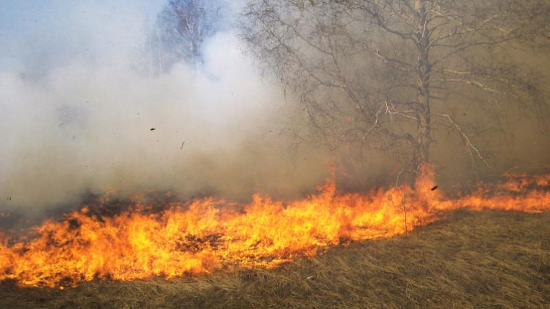 في ثمانية أيام: 552 حريقا في المساحات الزراعية