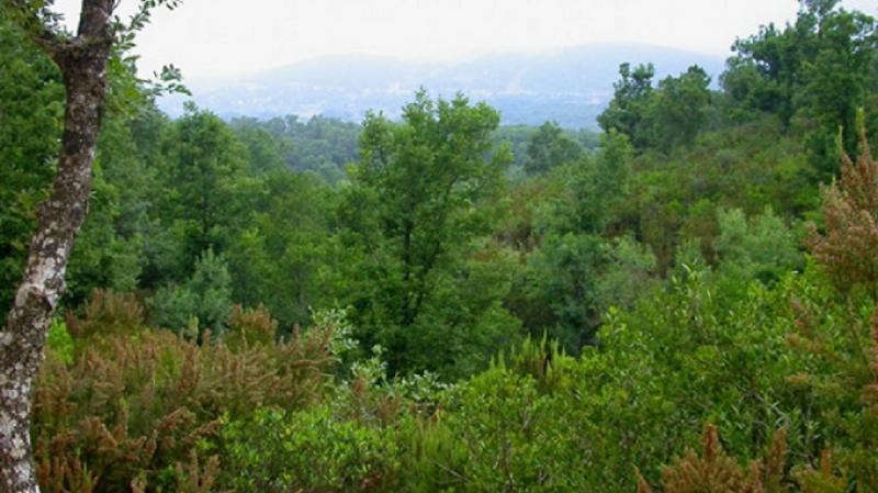 الكاف:الإعتداء على أعوان الغابات وتهشيم سيارتهم الادارية