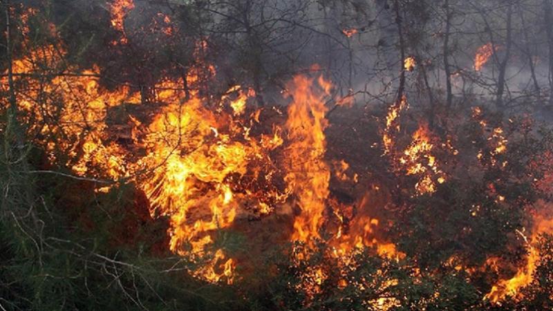 العروسة: اندلاع حريقهائل في ضيعة فلاحيّة