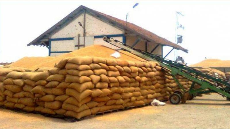 800 ألف قنطار من الحبوب في الهواء الطلق !