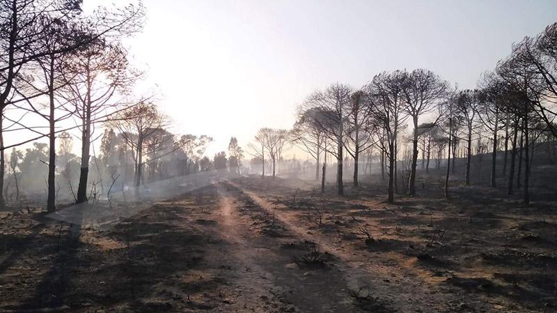 حريق غابة البندق: الأهالي يوجّهون نداء إستغاثة