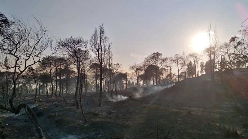 حريق غابة البندق: تضرّر 100 هكتار على الأقل