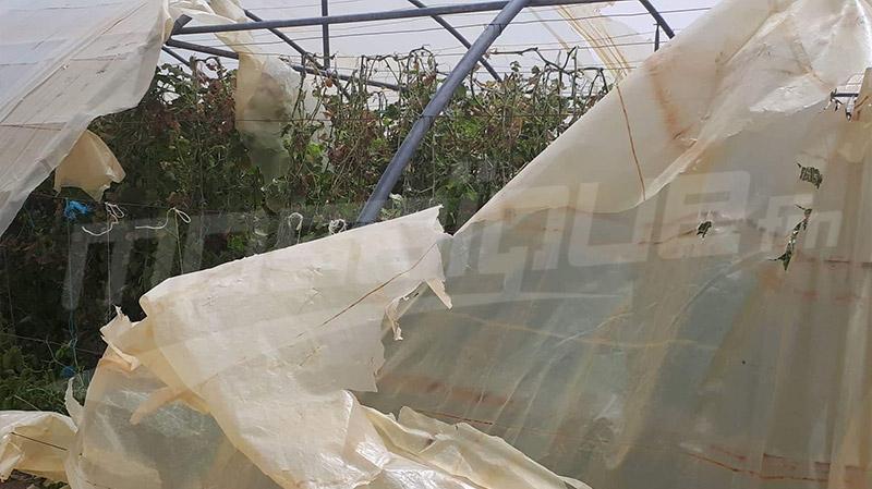 القيروان:أضرار فلاحية بسبب نزول كميات هامة من الأمطار والبرد