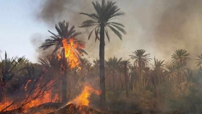 توزر:إخماد حريق اندلع بواحة توزر القديمة