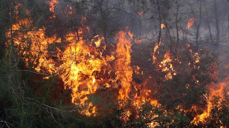 سيدي ثابت: حريق يأتي على حوالي 40% من المساحات الغابية